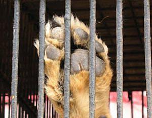 mascotas_perro_enjaulado