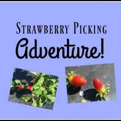 The Treasure of My Strawberry Picking Adventure