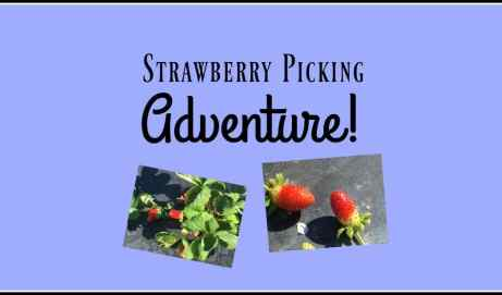 The Treasure of My Strawberry Picking Adventure