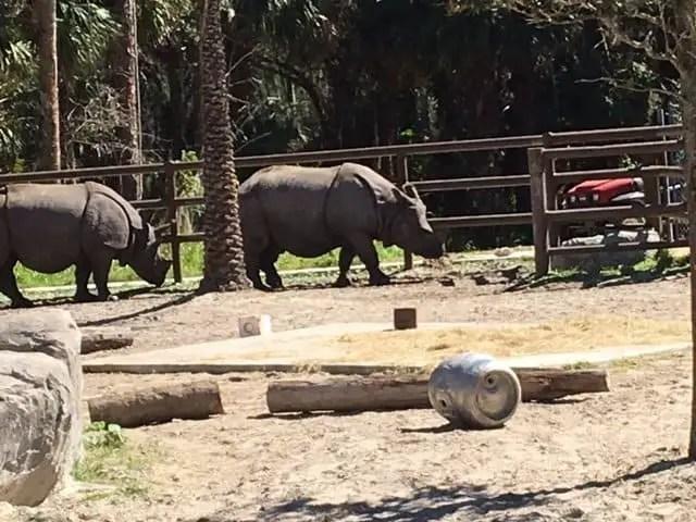 rhino experience
