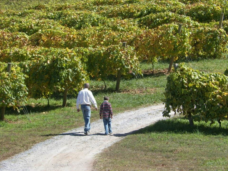 vineyard in north Georgia