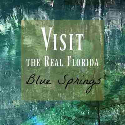 Blue Springs ~ The Beautiful & Real Florida You Need to See