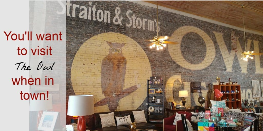 see the owl on your day trip from Austin