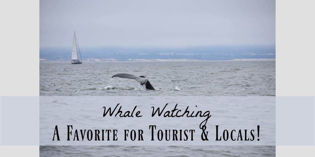 whale watching from Monterey Peninsula