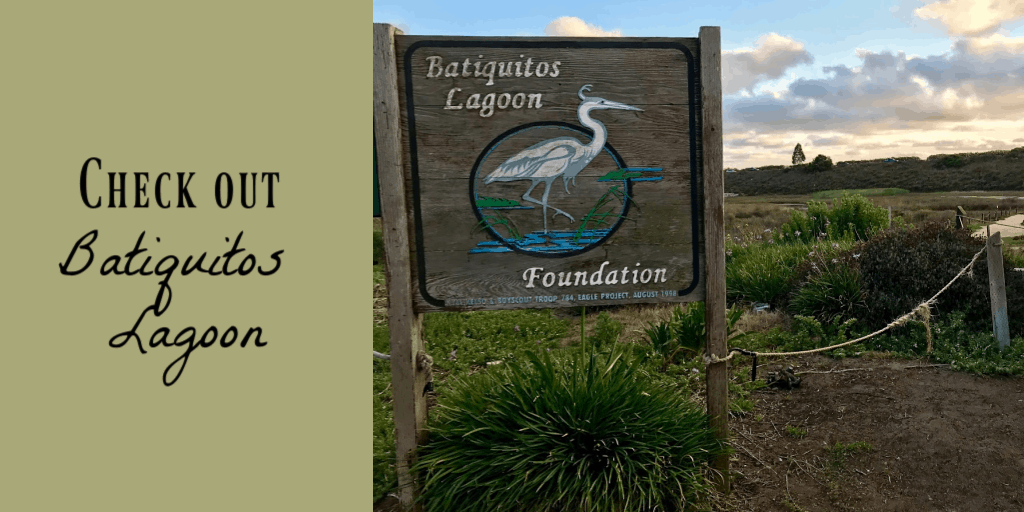 Batiquitos Lagoon - things to do in Carlsbad