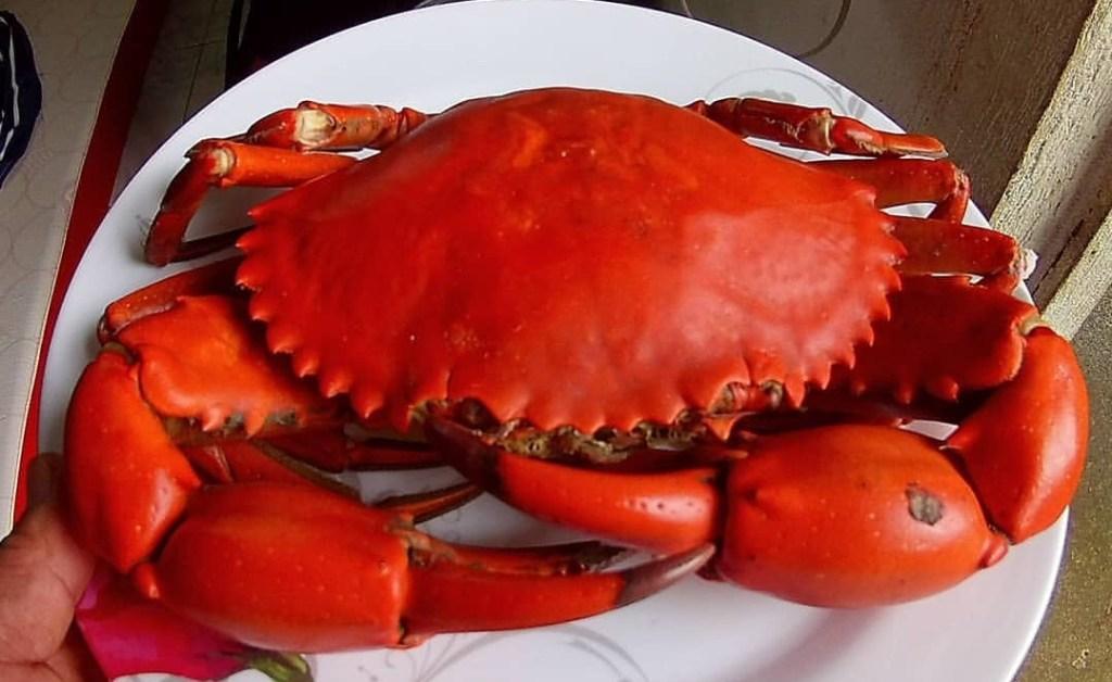 Philippine crab