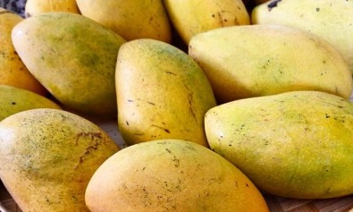 Filipino Mangoes