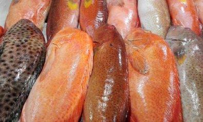Lapu-Lapu fish.
