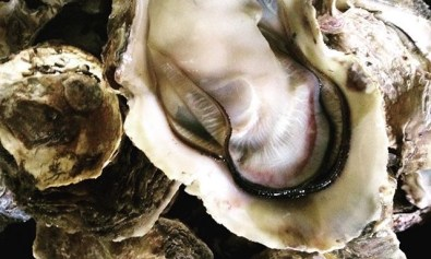 Oyster in Shell