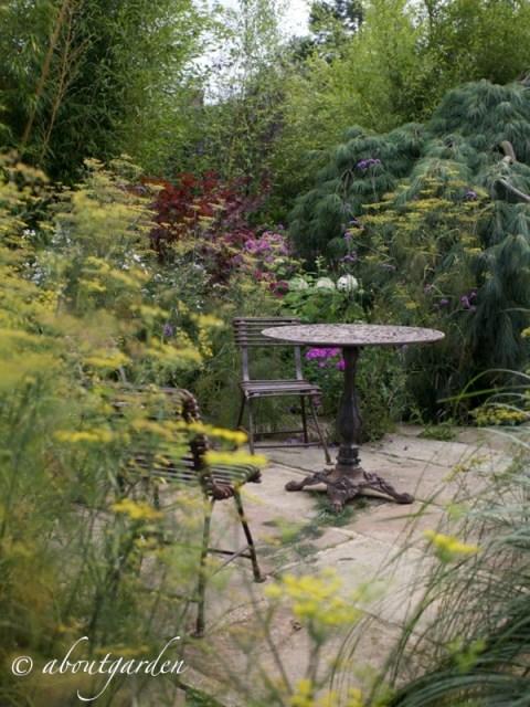 Foeniculum jardins d'Agapanthe