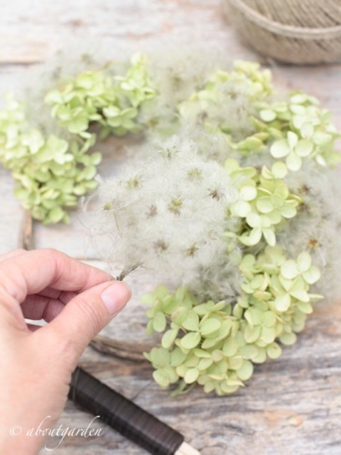 hydrangea flowers and clematis seeds