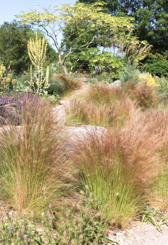 particolare del dry garden