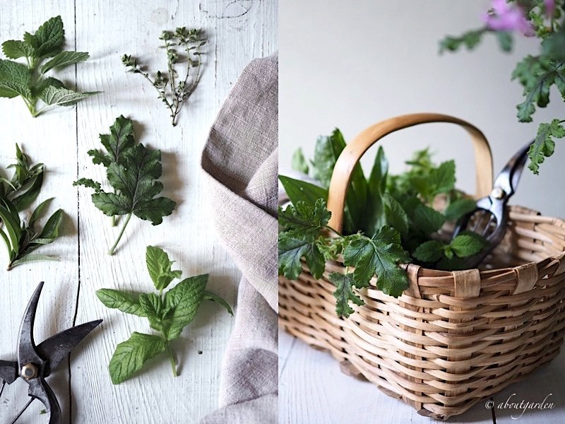 cestino di erbe profumate e pelargonio odoroso