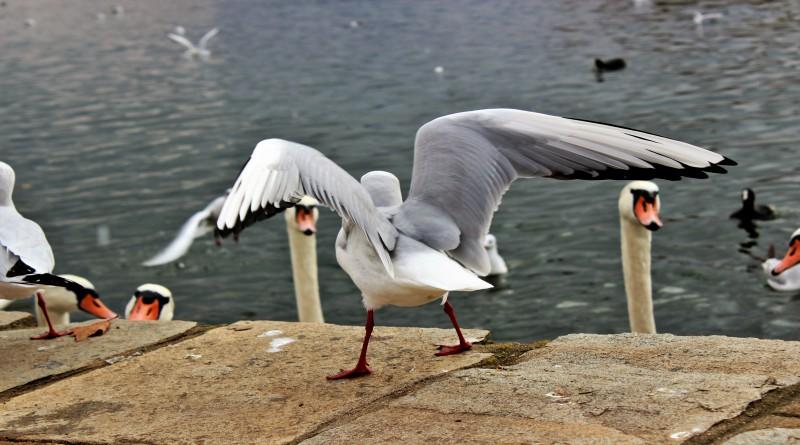 Εκπληκτικές εικόνες στη λίμνη, Σάββατο μεσημέρι του Νοέμβρη