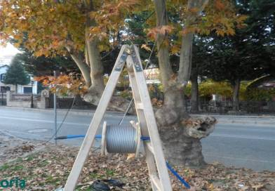 Τοποθετούνται λαμπάκια σε δέντρα της παραλίας – φωτο