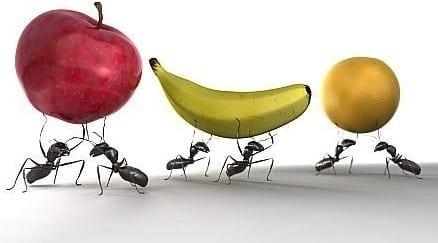 Ant Leadership