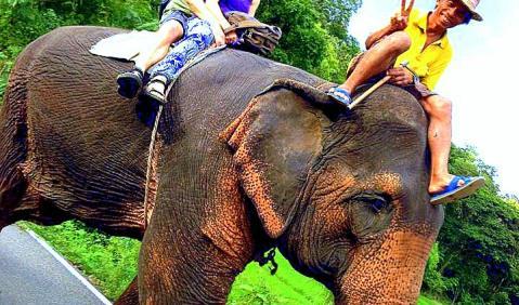 กิจกรรม อำเภอปาย,ขี่ช้าง อำเภอปาย,กิจกรรม แม่ฮ่องสอน,ขี่ช้าง แม่ฮ่องสอน,ท่องเที่ยว ปาย