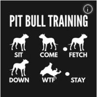 pit bull training wtf tshirt
