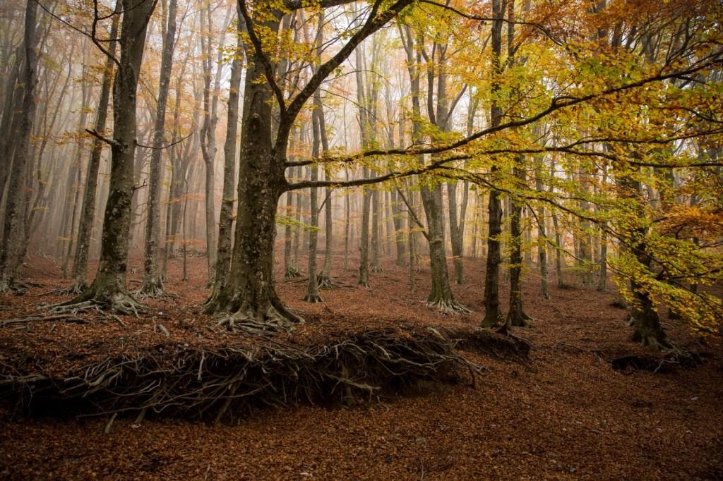 Monte Faito in autunno about Sorrento