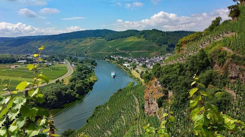 Поздний сбор: в Германии весенние заморозки отодвинули начало винодельческого сезона