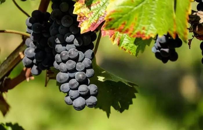 Закон о виноделии теперь обеспечит господдержку отрасли