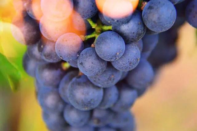 Органическое вино: теперь и в России