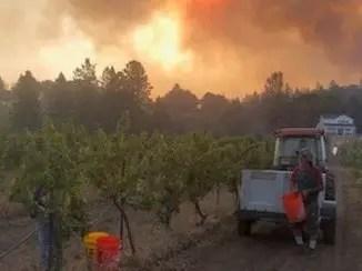 Калифорния в огне: «винная страна» снова охвачена пожарами