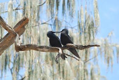 Birds, Wilson Island