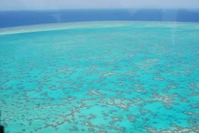 Wistari Reef