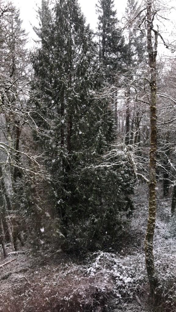 Snow, I smell SNOW