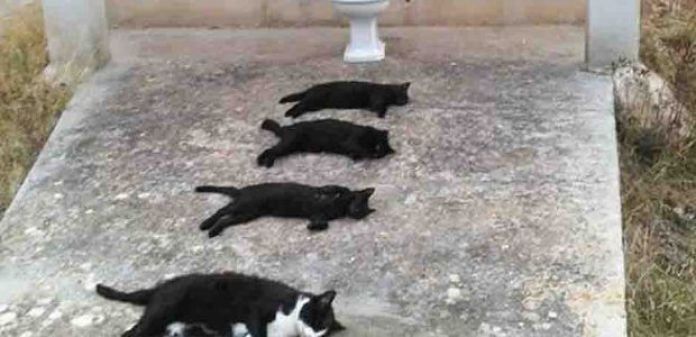 Horrible: mata 4 gatos para una fotografía