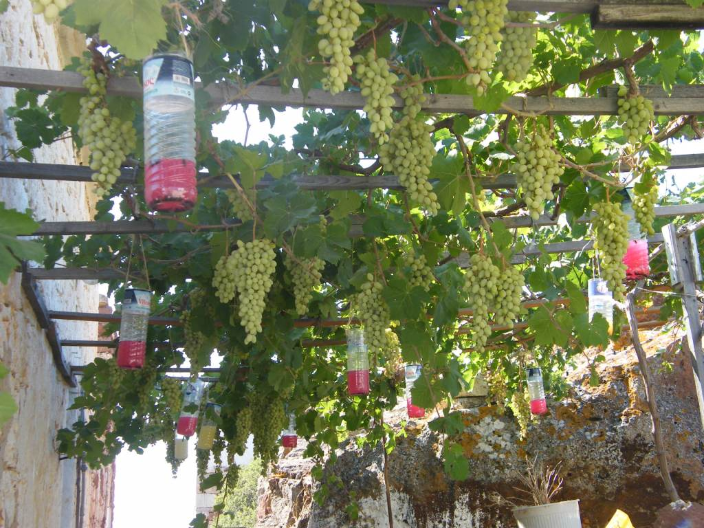 arche plantes grimpantes