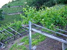 fabriquer une treille pour vigne