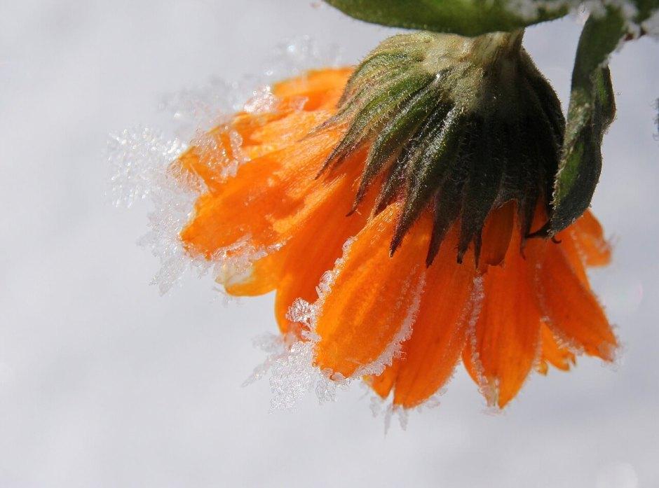 fleurs d'hiver autours d'une pergola