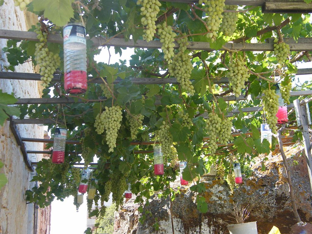 pergola pour plantes grimpantes