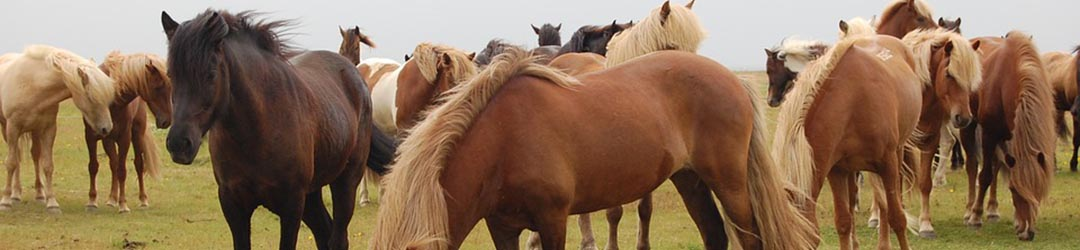 abris chevaux abri de prairie