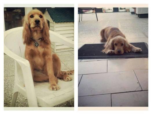 Nala, 1º perro adulto