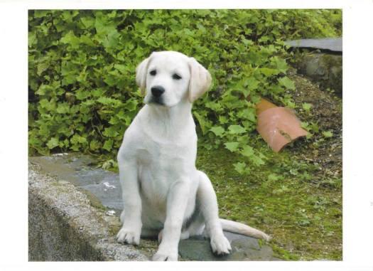 Nico, 3º cachorros