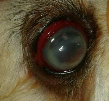 Ulcera melting 2
