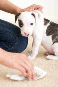 No debemos limpiar delante del cachorro ni reñirle