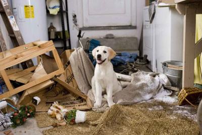 Tratamiento-de-la-ansiedad-por-separación-en-perros1