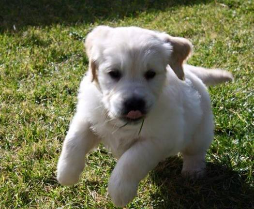 4º clasificado cachorros: Eros.