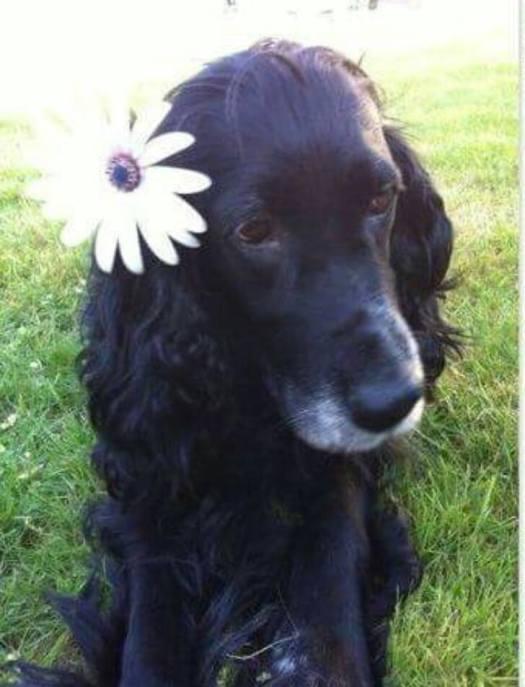 4º clasificado perros adutlos: Gordi