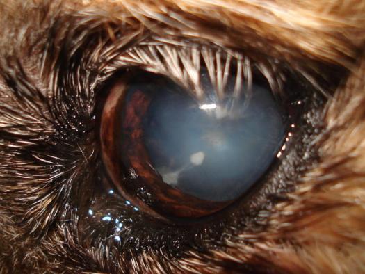 Aspecto de ojo afectado por catarata