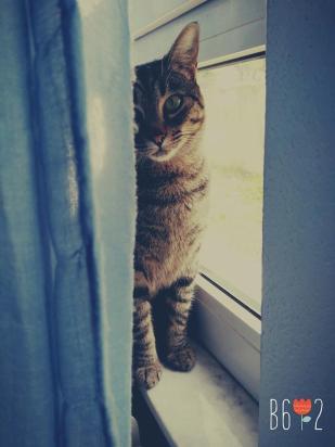 19.flicka.gato adulto
