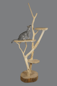 cat-furniture-2026488_1920