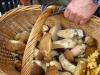 Cenano con funghi, intera famiglia intossicata