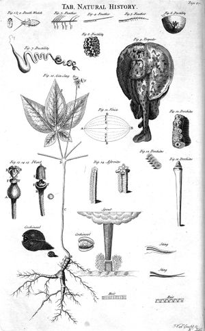 300px-table_of_natural_history_cyclopaedia_volume_2.jpg