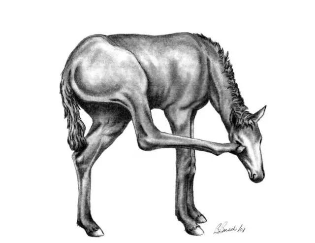 Image result for filly artwork