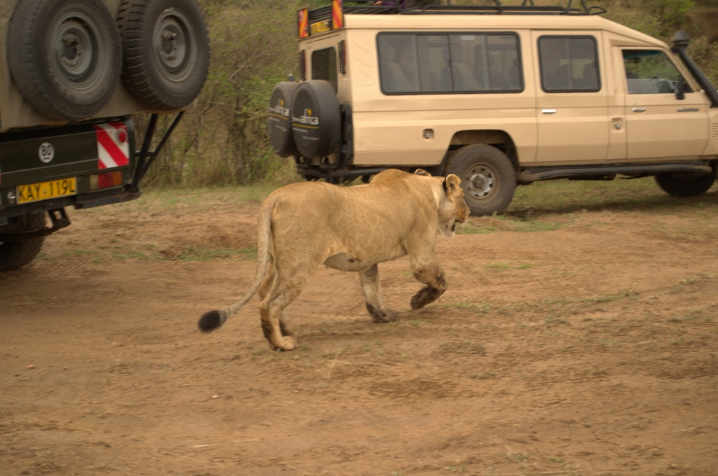 3 Days Masai Mara Game Reserve